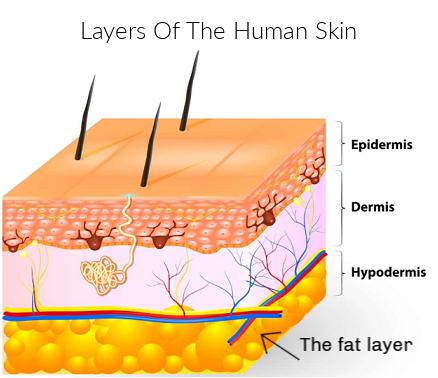 Face Exercising - the human skin